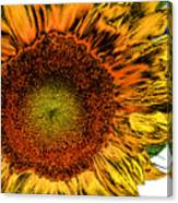 Dramatic Sunflower Canvas Print
