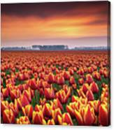 Dramatic Tulips Canvas Print
