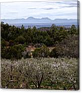 Draney Orchard Pano Canvas Print
