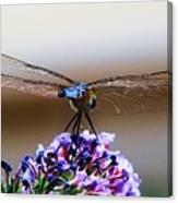 Drangonfly On A Purple Flower Canvas Print