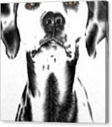 Drawing Of A Dalmatian Dog Canvas Print