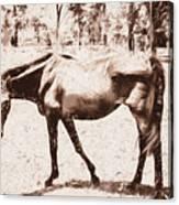 Drawn Ranch Horse Canvas Print