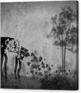 Dream 5111a Canvas Print