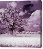 Dream Tree Canvas Print