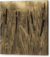Dreaming Of Cattails Canvas Print