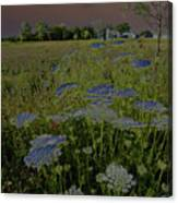 Dreaming Of Queen Annes Lace Canvas Print