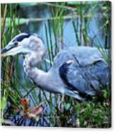 Dreamland Great Blue Heron Canvas Print