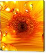 Dreams 2 - Gerbera Sunrise Canvas Print