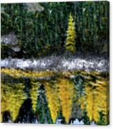 Dreams Of A Young Tamarack Canvas Print