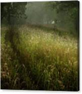 Dreams Of Grass Canvas Print