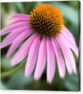 Dreamy Coneflower Canvas Print