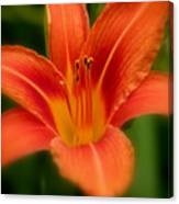 Dreamy Day Lily Canvas Print