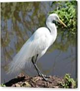 Dreamy Great Egret Canvas Print