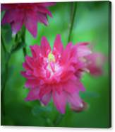 Dreamy Hot Pink Columbine Squared Canvas Print