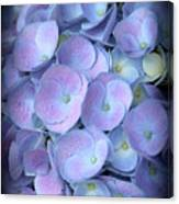 Dreamy Hydrangea In Purple And Blue  Canvas Print