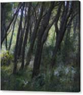 Dreamy Marjan Forest In Croatia Canvas Print