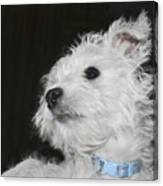 Dreamy Puppy Canvas Print