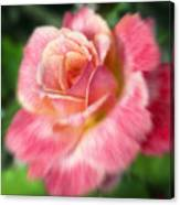 Dreamy Rose Canvas Print
