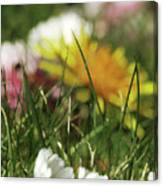 Dreamy Spring Canvas Print