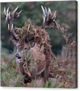 Dressed Red Stag Canvas Print