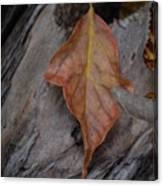 Dried Leaf On Log Canvas Print