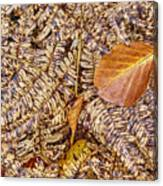 Dried Leaf On The Fern Canvas Print
