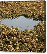 Dried Leaves In A Pond Canvas Print