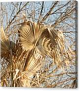 Dried Palm Fronds In The Wind Canvas Print