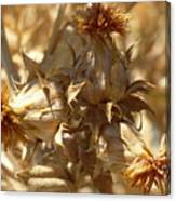 Dried Safflower Canvas Print