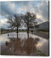 Dried Tree Reflected Canvas Print