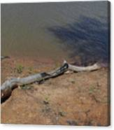 Drift Wood Red River Texas Canvas Print
