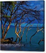 Driftwood 01 Canvas Print