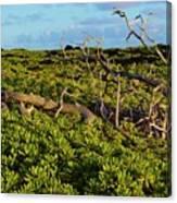 Driftwood Among The Naupaka  Canvas Print