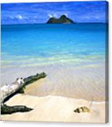 Driftwood And Islands Canvas Print