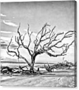 Driftwood Beach - Black And White Canvas Print