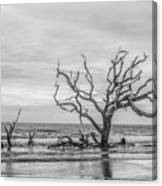 Still Standing In Black And White Canvas Print
