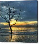 Driftwood Beach Sunrise Jekyll Island Georgia Canvas Print