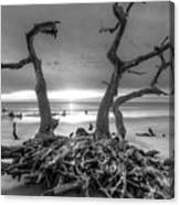 Driftwood Black And White Canvas Print