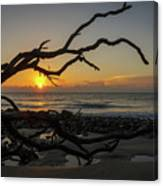 Driftwood Dawn Canvas Print