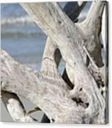 Driftwood Detail Canvas Print