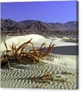 Driftwood Dune Canvas Print