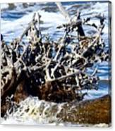 Driftwood Lace Canvas Print