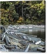 Driftwood On The Beach Sucia Island Canvas Print