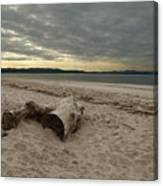 Driftwood On West Sands Canvas Print