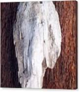 Driftwood Shell Canvas Print