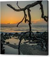 Driftwood Sunrise Canvas Print