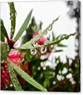 Drip And Drop Canvas Print