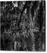 Drippin With Spanish Moss At Middleton Place Canvas Print