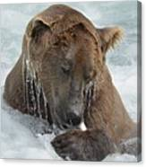 Dripping Grizzly Bear Canvas Print