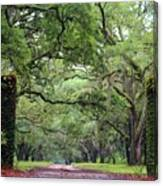 Driveway To The Past Canvas Print